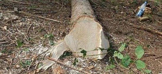 Mężczyzna zginął podczas prac w lesie