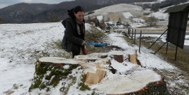 Trwa śledztwo w sprawie wycinki w Terce. Kolejna afera z drzewami w gminie Solina? (ZDJĘCIA)