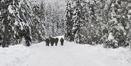 BIESZCZADY: Odprawa kadry kierowniczej pograniczników. Strażnicy przemaszerowali do granicy (ZDJĘCIA)