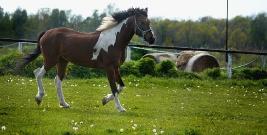 BIESZCZADY: Powojenne Targi Końskie. Koncerty, parady koni