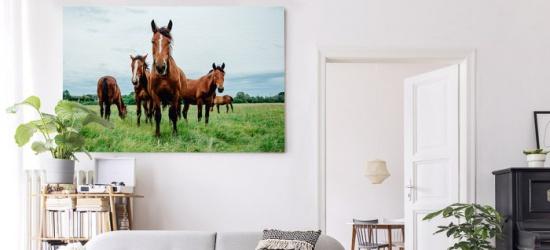 Obrazy z końmi – dekoracja w wielkim stylu