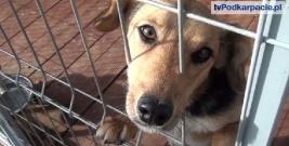 """LESKO: Marzenia się spełniają. """"Wesoły Kundelek"""" ostoją dla bezdomnych psów (FILM)"""
