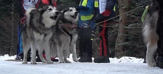 Rozpoczęły się wyścigi psich zaprzegów w Bystrem (FILM)