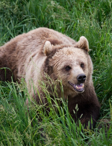 Nie żyje 60-latek poszukiwany przez ratowników GOPR, których zaatakował niedźwiedź (FILM, ZDJĘCIA)