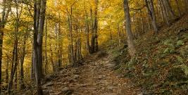 BIESZCZADY: Zachwycająca i pełna kolorów. Jesień w naszym regionie jest wyjątkowo piękna! (ZDJĘCIA)