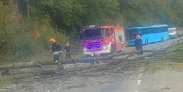 Niebezpiecznie w Zahoczewiu. Drzewo spadło na drogę (ZDJĘCIA)