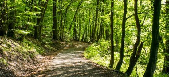 Zatrzymany podczas kradzieży drewna z lasu