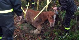 Ranny koń uwięziony w przydrożnym rowie. Nietypowa akcja strażaków (ZDJĘCIA)